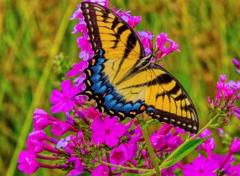 Butterfly Thursdays at Delaware Botanic Gardens