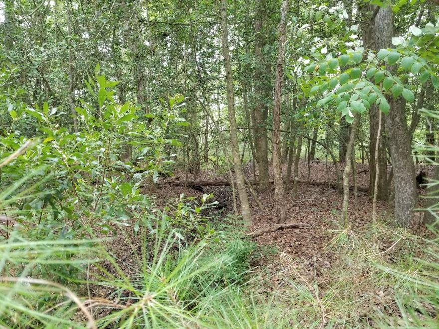 Assawoman Wildlife Area